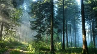 Тёмный Лес 1 Серия