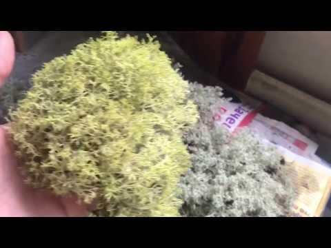 Как стабилизируют мох