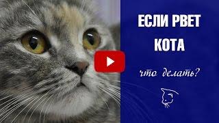 Что делать если вашего кота рвет? Расскажем о причинах и способах лечения ✅ Мальт паста