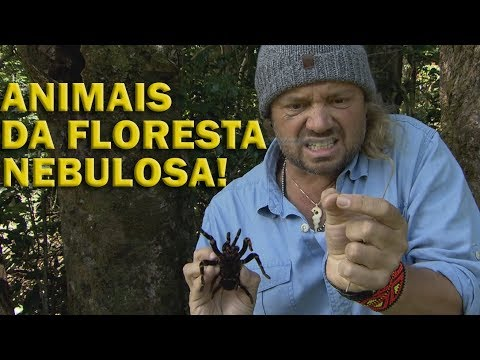 #4 COSTA RICA | CLOUD FOREST, A FLORESTA NEBULOSA! PARTE 1 | RICHARD RASMUSSEN