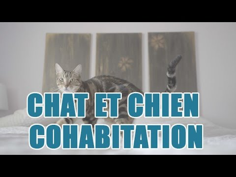 Habituer Un Chat à Un Chien