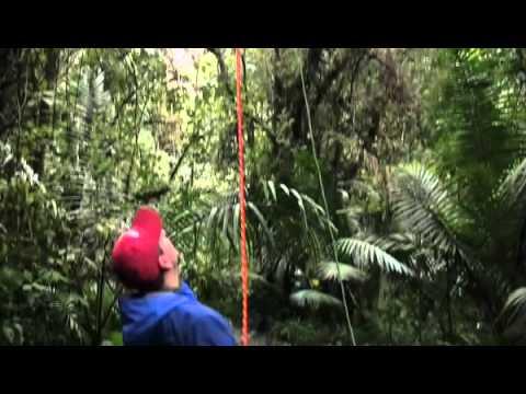 Eric Lindquist Biology 101 - Los Questzales Lodge, Panama #2