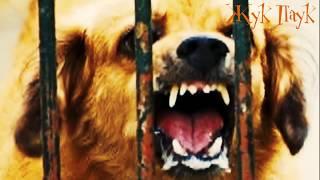 ЧТО БУДЕТ, ЕСЛИ УКУСИТ БЕШЕНАЯ СОБАКА?!(Мой второй канал со страшными историями Бульварные Ужасы - http://vk.cc/5bjOGQ ПОДПИСЫВАЙТЕСЬ Смотрите: САМЫЕ..., 2016-05-20T11:28:57.000Z)