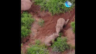 GLOBALink | Baby elephants engage in adorable play fight in Yunnan, China