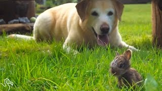 Dog Is Completely Convinced This Bunny Is A Puppy | The Dodo