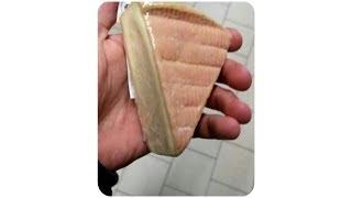 Das ist KEIN Käse, sondern KUCHEN!..