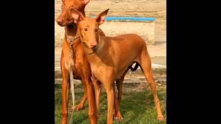 производство сухих кормов для собак