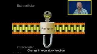 Basic Principles in Pharmacology