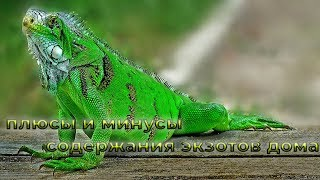 Мир рептилий