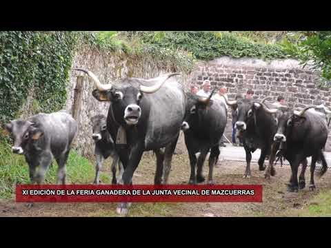 800 Cabezas de Ganado participan en la XI Feria ganadera de Mazcuerras