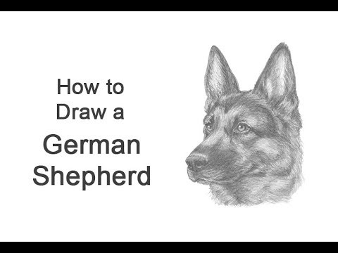 How To Draw A German Shepherd Dog Head Detail