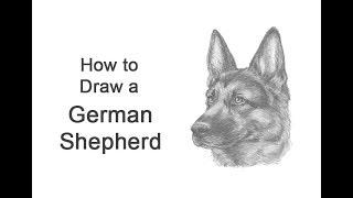 How to Draw a German Shepherd Dog (Head Detail)