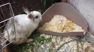 Декоративные кролики Разведение карликовых кроликов. Мои Хобби. Домашние животные. Кролики карлики.