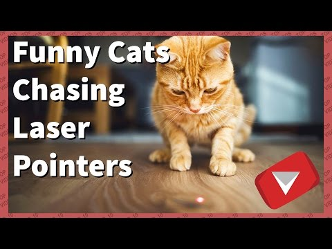 Funny Cats Chasing Laser Pointers [2017] (TOP 10 VIDEOS)