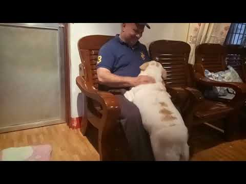 DOG REUNITED THE OWNER