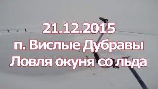 Ловля окуня на балансир по первому льду на Черемшане.