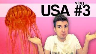 USA #3 - Latający skkf, skutery śnieżne i meduzy!