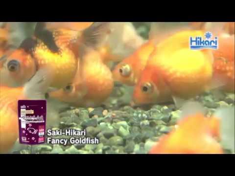 Saki-Hikari Fancy Goldfish 【KYORIN,HIKARI,Goldfish Diets】