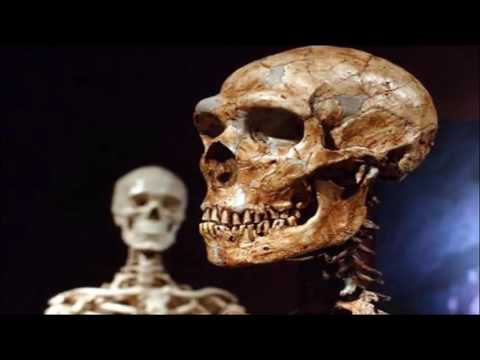 Neanderthals: patients could self-medicate.