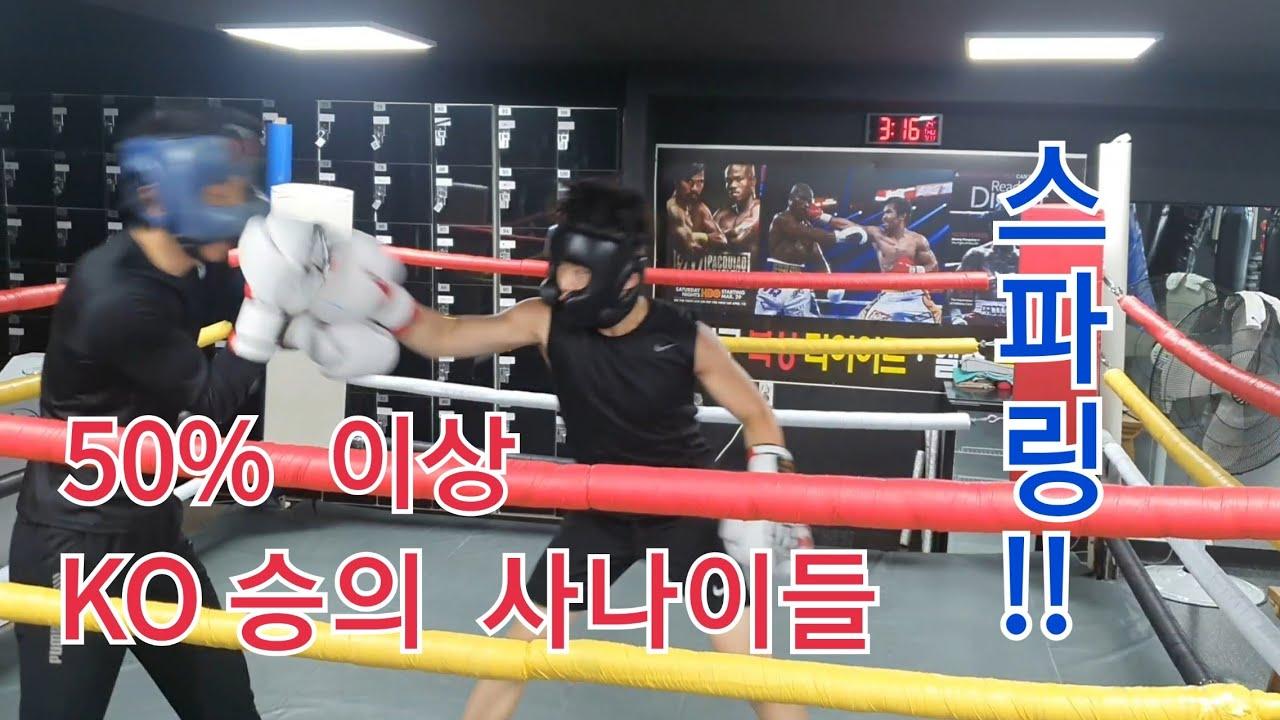 50% 이상   KO승의 사나이들 스파링 !!