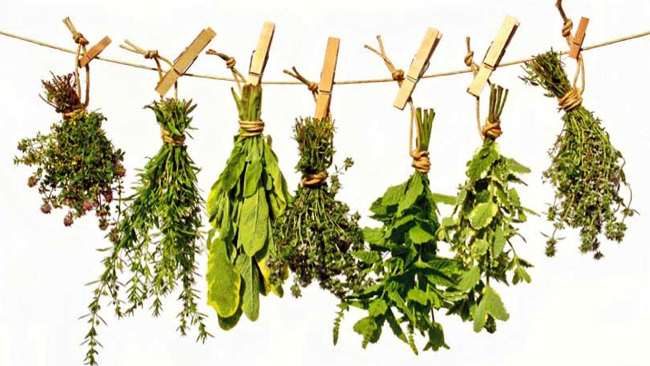 Arma tu botiquín casero: propiedades medicinales de las hierbas ...