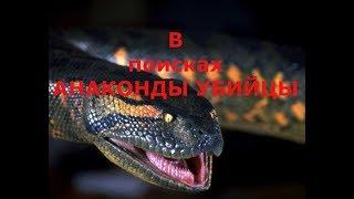 В поисках анаконды убийцы!!!! Новосибирск, Обь, лето 2017!!! ужасы!!!