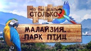 Парк птиц Куала-Лумпур Малайзия ЧТДС №18(Видеоотчет о нашем путешествии, парк птиц Куала-Лумпур, Малайзия ↓ Больше полезного ниже!↓ Подпишитесь..., 2014-11-06T12:48:17.000Z)