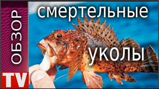 ПУШКИНО Опасная  Рыба  Скорпена или  Рыба Еж