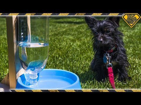Self Filling Water Bowl for Pets