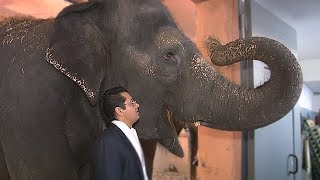 Сюжет ТСН24: В тульский цирк привезли слонов