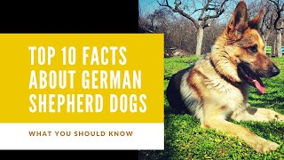 Top 10 Facts about German Shepherd Dogs| what you should know |Simmer and Sasha