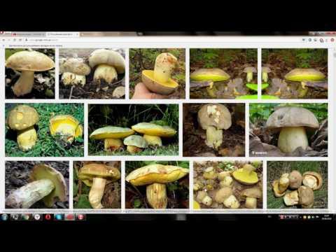 Плесневые грибы