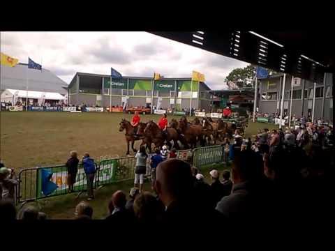 Attelage à 11 chevaux