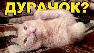 Кот, который спит с открытыми глазами!