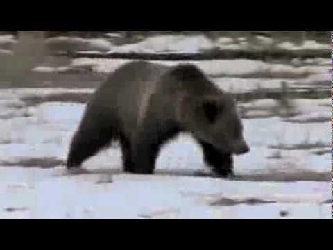 Catskill Bear Hunting