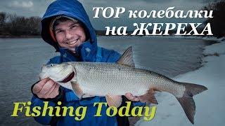 Ловля жереха на спиннинг. Какие блесны работают - Fishing Today