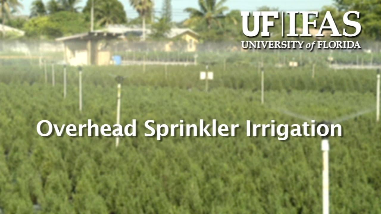 Overhead Sprinkler Irrigation Youtube