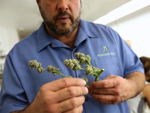 Medicine Man Marijuana Dispensary In Denver | Weed Revolution