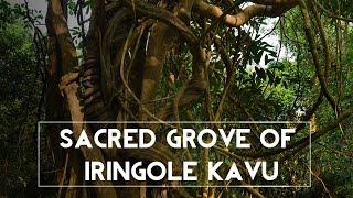 Sacred Grove of Iringole Kavu @ Perumbavoor   Kerala Temples
