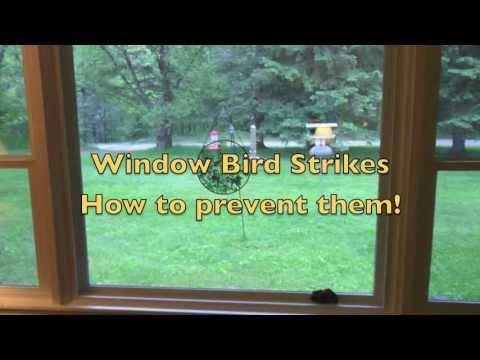 Bird Strike Prevention YouTube - Window decals to prevent bird strikes