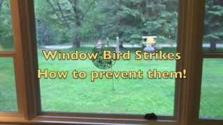 Bird Strike Prevention