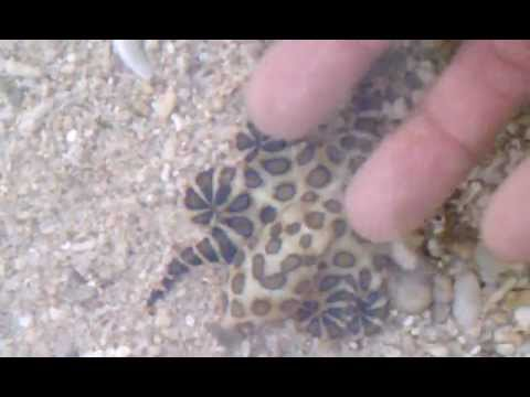 Playing with a blue ringed octopus .. not good.