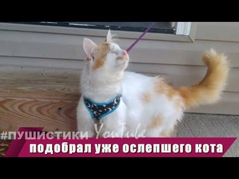 Вопрос: Обязательно ли удалять островки тканей глазного яблока у слепого кота?