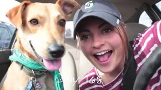 Bringing Justice Home: A Rescue Dog's Adoption Story