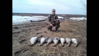 Охота на гуся. 13-14 апреля 2017