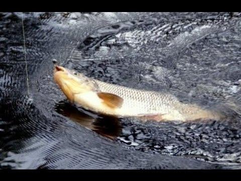 Рыбалка в Псковской области. Настоящая рыбалка в Псковской области