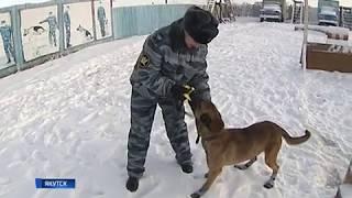 Клонированные собаки на службе в ИК 1