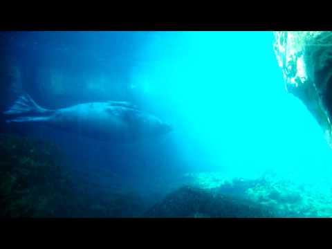 New York Aquarium, the Walrus
