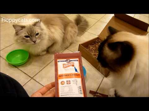 ragdoll-cats-receive-bravo-mariners-medley-cat-treats-freeze-dried-ねこ-ラグドール-floppycats