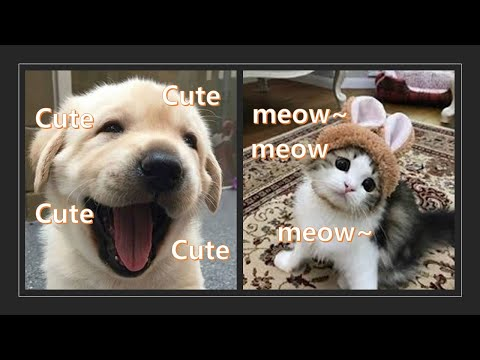⛄Funniest Cats 🐱 And Dogs 🐶! Awesome Animals